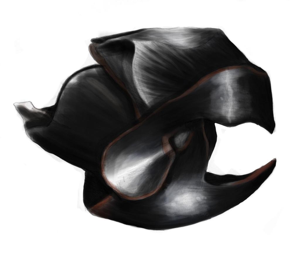 Illustrazione del becco chitinico di un Calamarus Colossus
